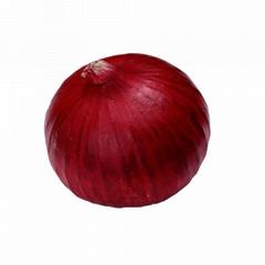 New fresh Onion