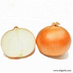 Yello Onion