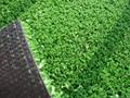 網球場專用人工草坪 2