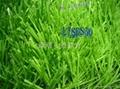 國產單絲人造草