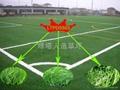 雙色單絲人造草坪 2