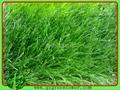 雙色單絲人造草坪 3