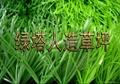雙色單絲人造草坪 5