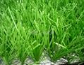 W型單絲人工草坪 2