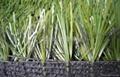 賽爾隆橄欖單絲人造草坪 3