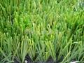 双面筋人造草坪 4