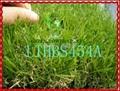 四色景觀人造草坪 2