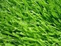 W型單絲人工草坪 4