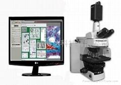 显微影像分析系统