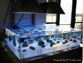 Acrylic Sheets for Acquarium/Swimming