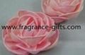 rose--sola flower