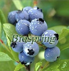 Blueberry P.E. 1