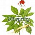 Ginseng General Ginsenosides P.E.