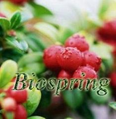 Cranberry P.E.(cranberry extract)