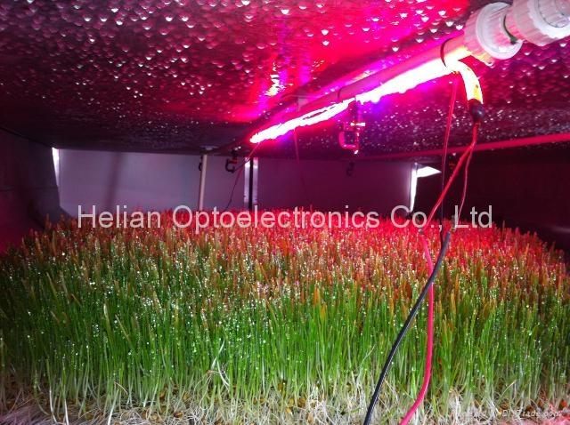 LED Flex grow strip lights for plants 3