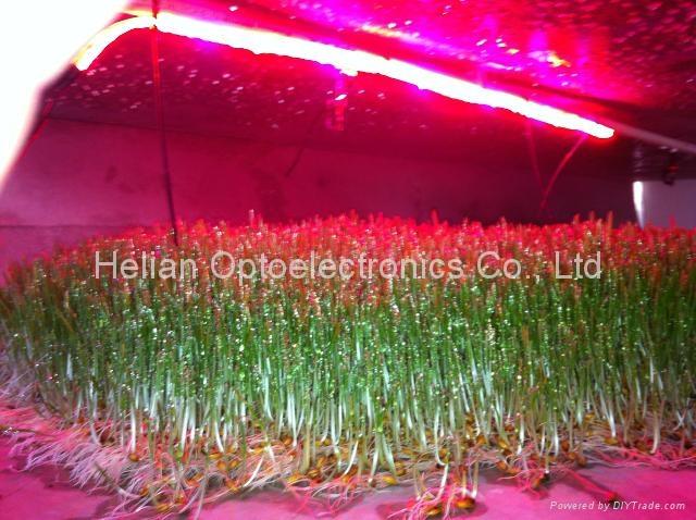 LED Flex grow strip lights for plants 4