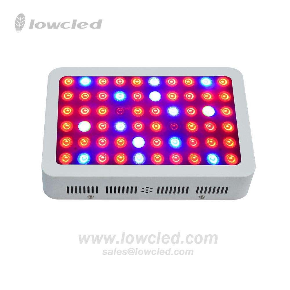 Indoor plants growing 300W full spectrum led grow light for medical plants 2