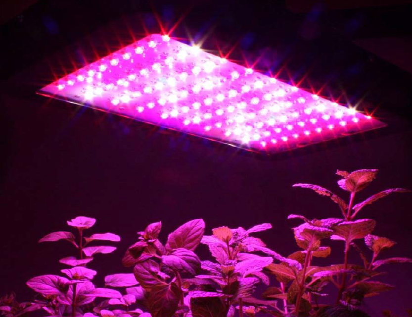 Cheaper and lighter 600w full spectrum led grow light 1