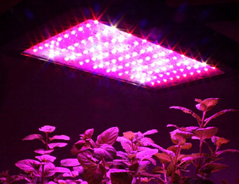 Cheaper and lighter 600w full spectrum led grow light