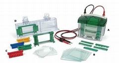 美国Bio-Rad伯乐Mini-Protean小垂直板电泳槽蛋白电泳系统