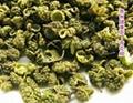 Green Prickly Ash