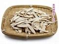 White Paeony Root