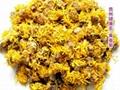 黃春菊 Chamomile