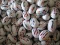 RUGBY橄榄球、PVC、PU高发泡英式橄榄球 5