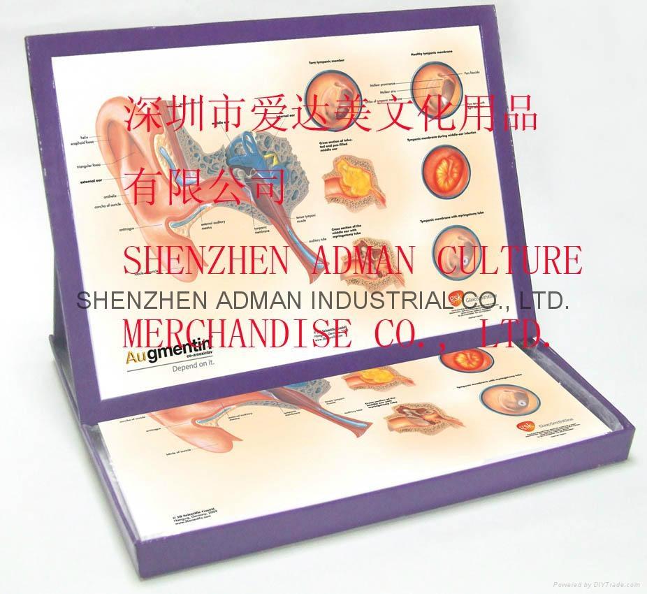 立体医学便签盒 1