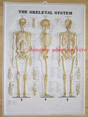 SKELETON--3D EMBOSSED HUMAN BODY ANATOMY CHART/POSTER