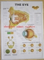 EYE--3D EMBOSSED MEDICAL HUMAN PVC CHART/POSTER
