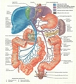 三维立体PVC人体解剖挂图/广告画 2