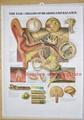 三维立体PVC人体解剖挂图/广告画