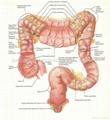 BRAIN--3D EMBOSSED HUMAN BODY ANATOMY CHART/POSTER 3