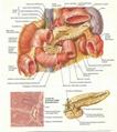 BRAIN--3D EMBOSSED HUMAN BODY ANATOMY CHART/POSTER 4