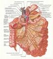 BRAIN--3D EMBOSSED HUMAN BODY ANATOMY CHART/POSTER 5