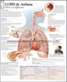 哮喘---三維立體PS/PET