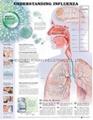 了解流感--三维立体PS/PET医学挂图/广告画 1