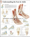 UNDERSTANDING THE FOOT & ANKLE--3D