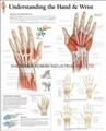 了解手和手腕-三维立体PS/P