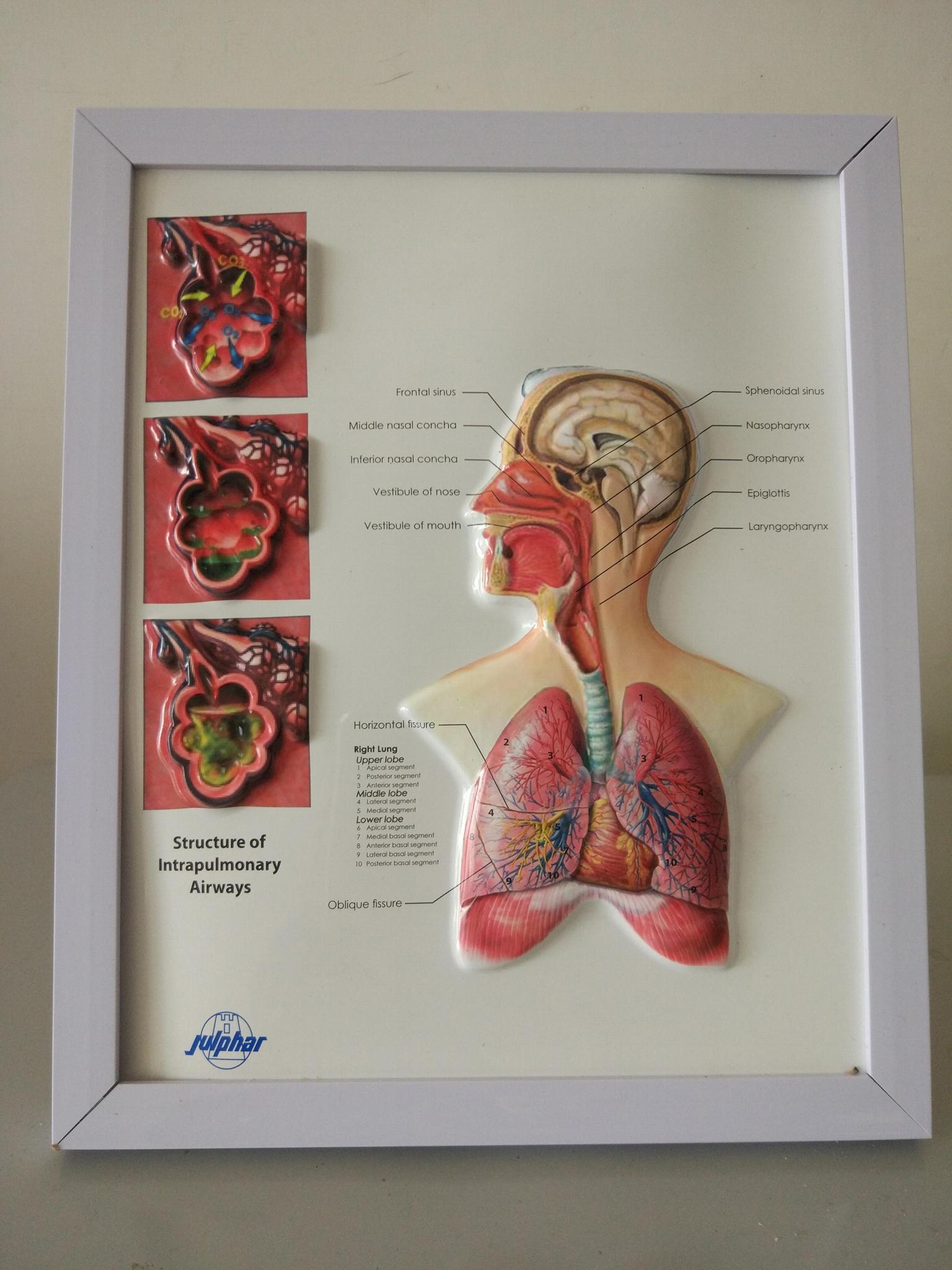 可擦寫三維立體桌面醫學圖/廣告畫 1