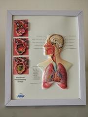 可擦寫三維立體桌面醫學圖/廣告畫