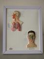 EASEL 3D RELIEF DESK MEDICAL POSTER/BOARD 3