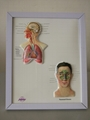 EASEL 3D RELIEF DESK MEDICAL POSTER/BOARD