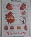 HEART 3D RELIEF WALL MEDICAL/PHARMA CHART/POSTER