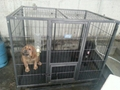 Dog cage(four foot)