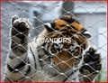 动物扣网-动物围栏网