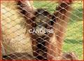 動物扣網-動物圍欄網 2