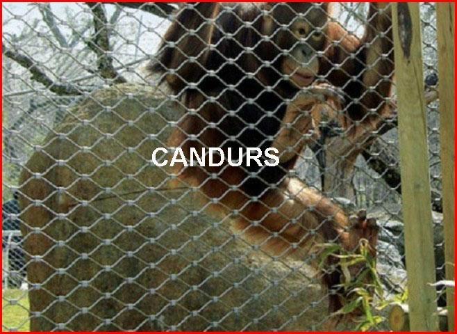 动物扣网-动物围栏网 3