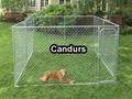 Outside Dog Kennels Runs-Large Dog